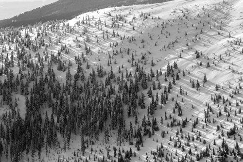 Zimowe drzewa
