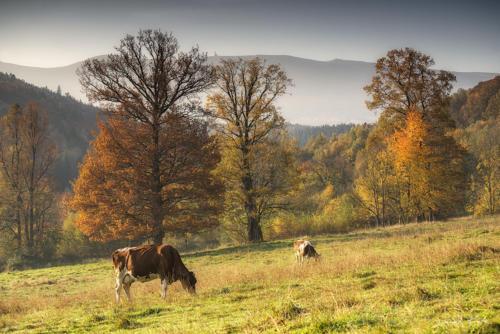 Jesień w Karkonoszach 1