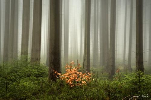 Las jesień