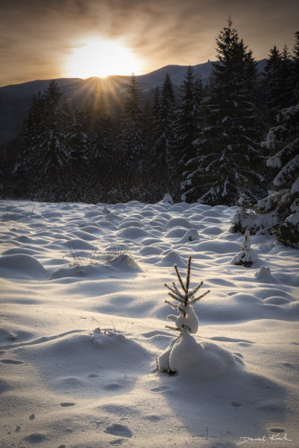 Zimowy Poranek