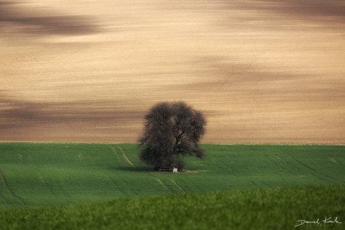 Morawy drzewo 1