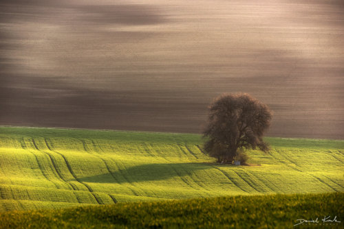 Morawy drzewo 2