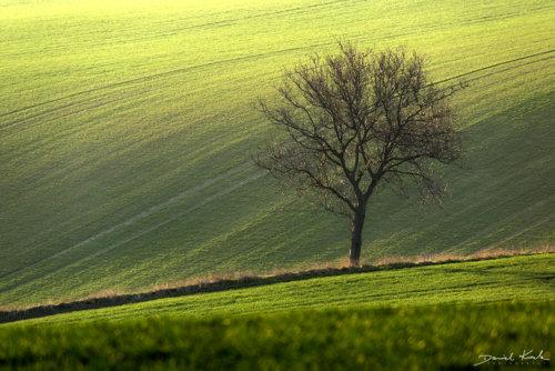 Morawy drzewo 3