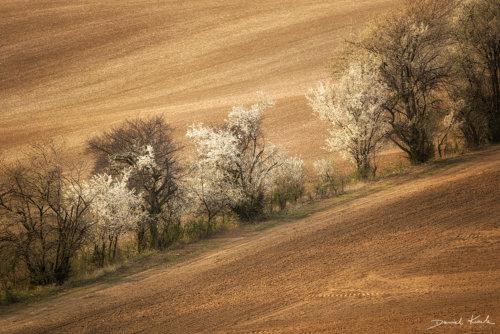 Morawy pola 1