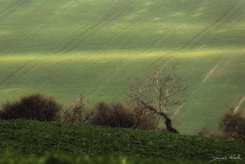 Morawy pola 10