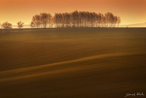 Morawy pola 11