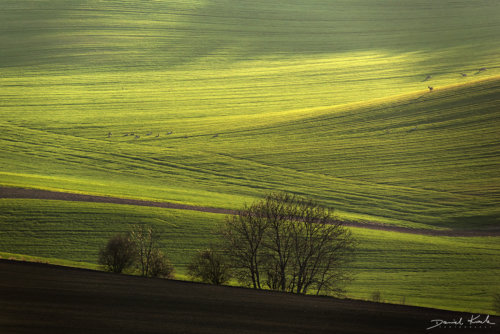 Morawy pola 12