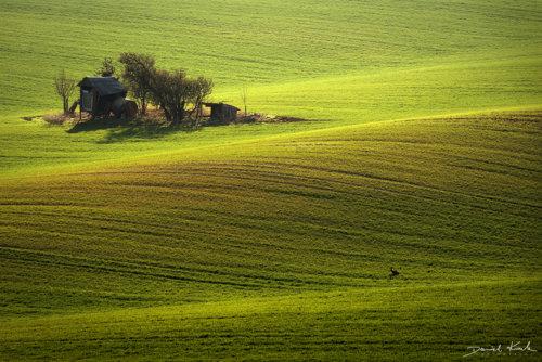 Morawy pola 13