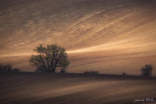 Morawy pola 14