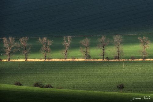 Morawy pola 15