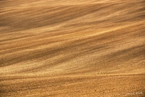 Morawy pola 2