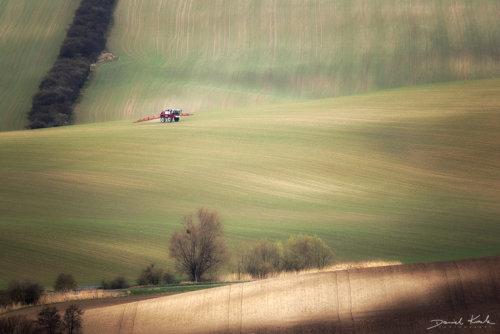 Morawy pola 4