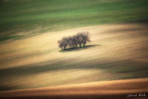 Morawy pola 5