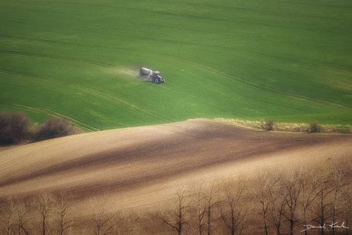 Morawy pola 6