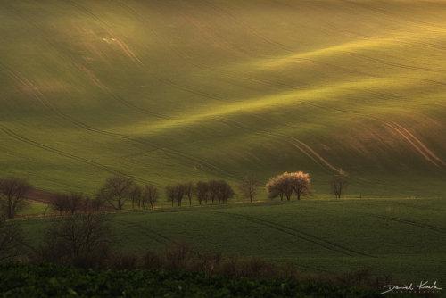 Morawy pola 8