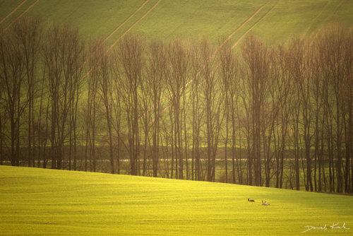 Poranne światło na polach Morawy